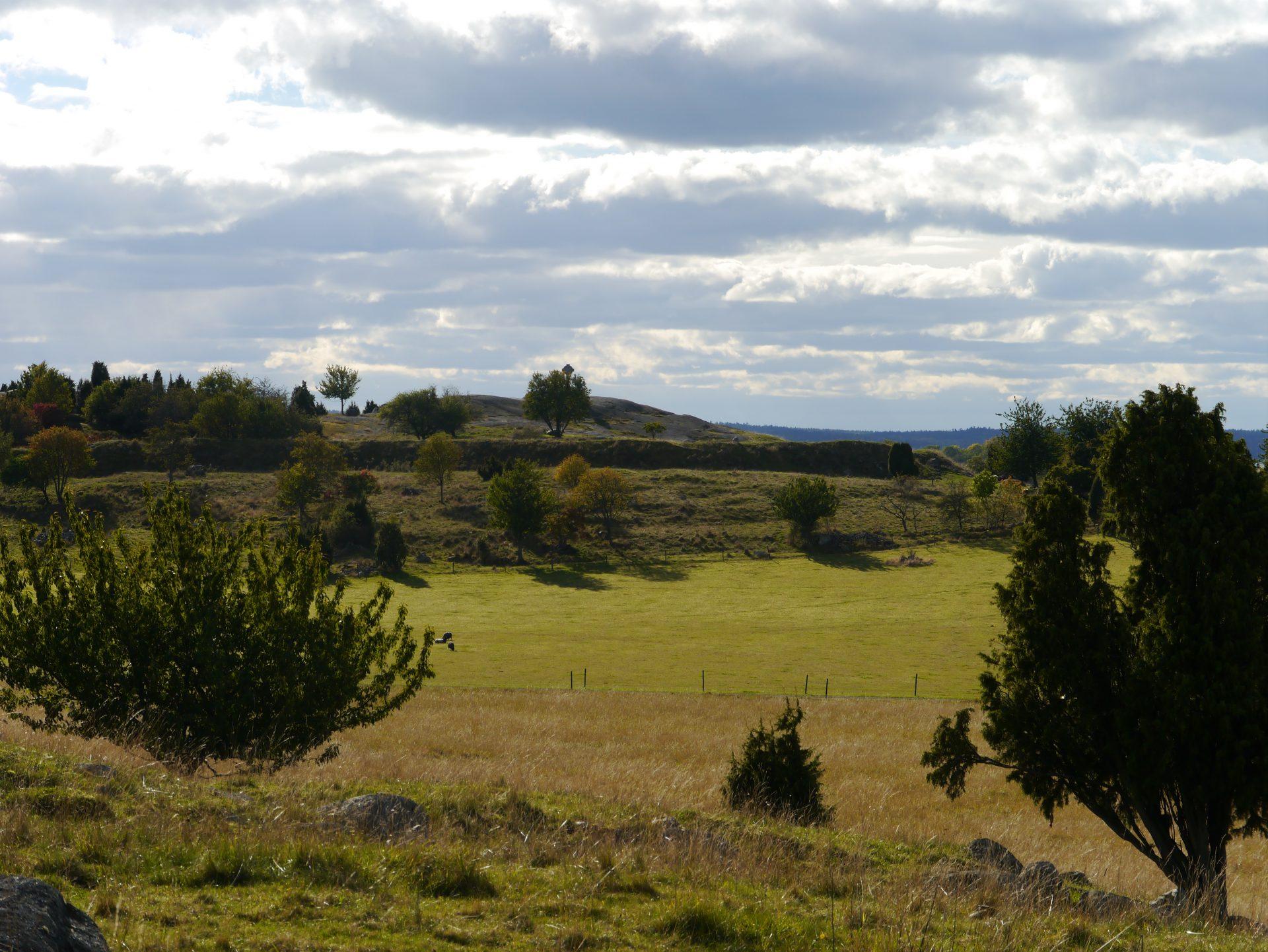Foto av vy över soligt ängslandskap på ön Björkö. Bilden visar platsen där rester av staden Birka har hittats