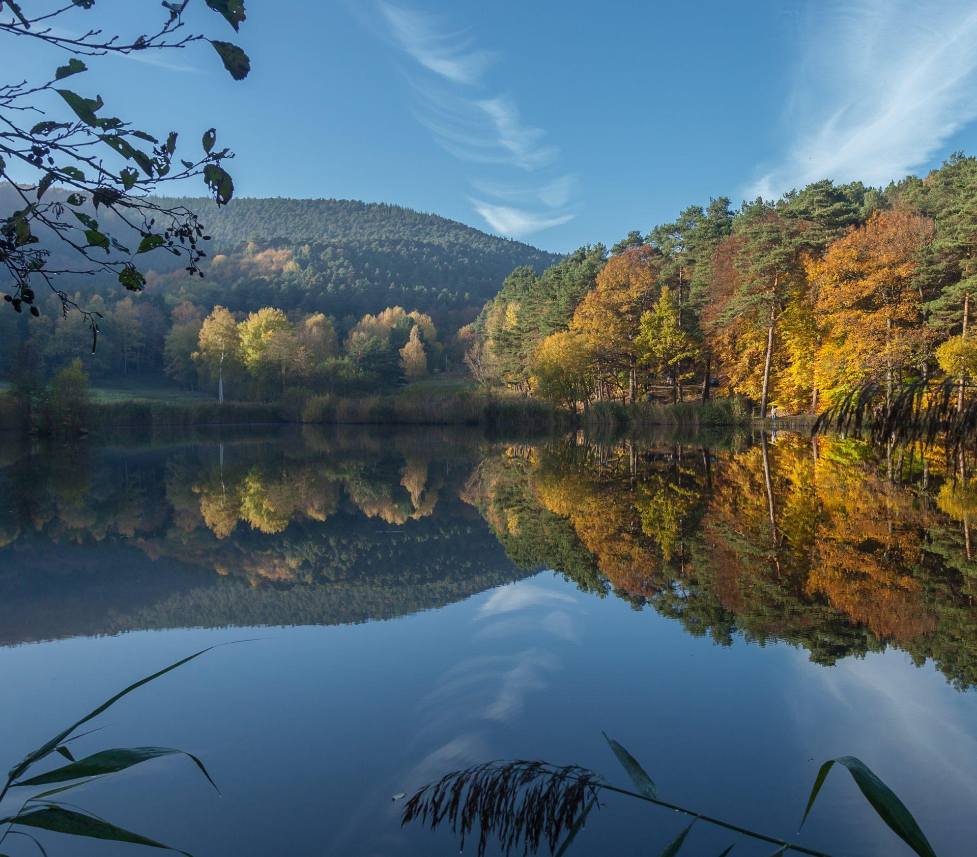 Foto av vy över vattendrag och skogsdunge