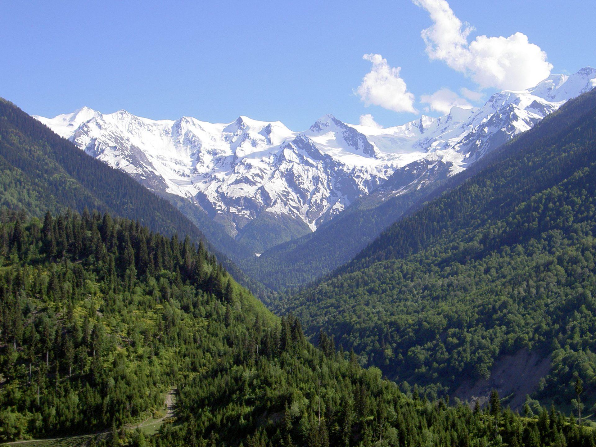 Naturvy på alptopp täckt med snö och granar i Georgien