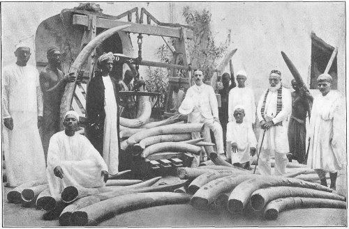 Flera män står runt om en hög med jättestora elefantbetar som ligger på marken.