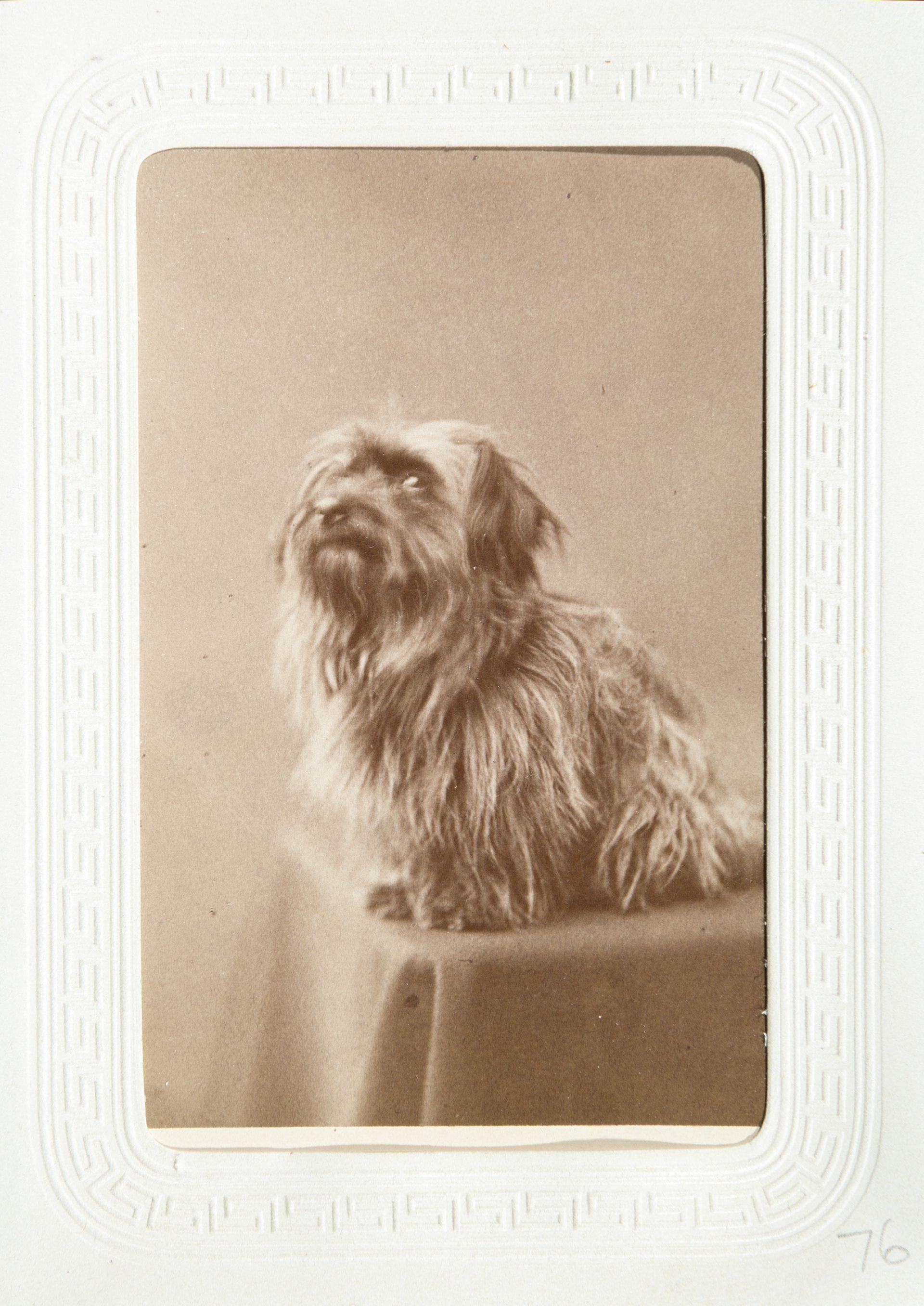 Ett gammalt foto av en hund som tittar ilsket mot kameran.