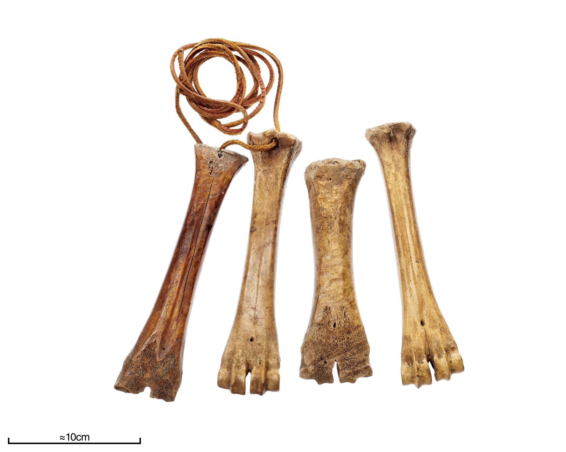 Fyra djurben som har använts som skridskor.