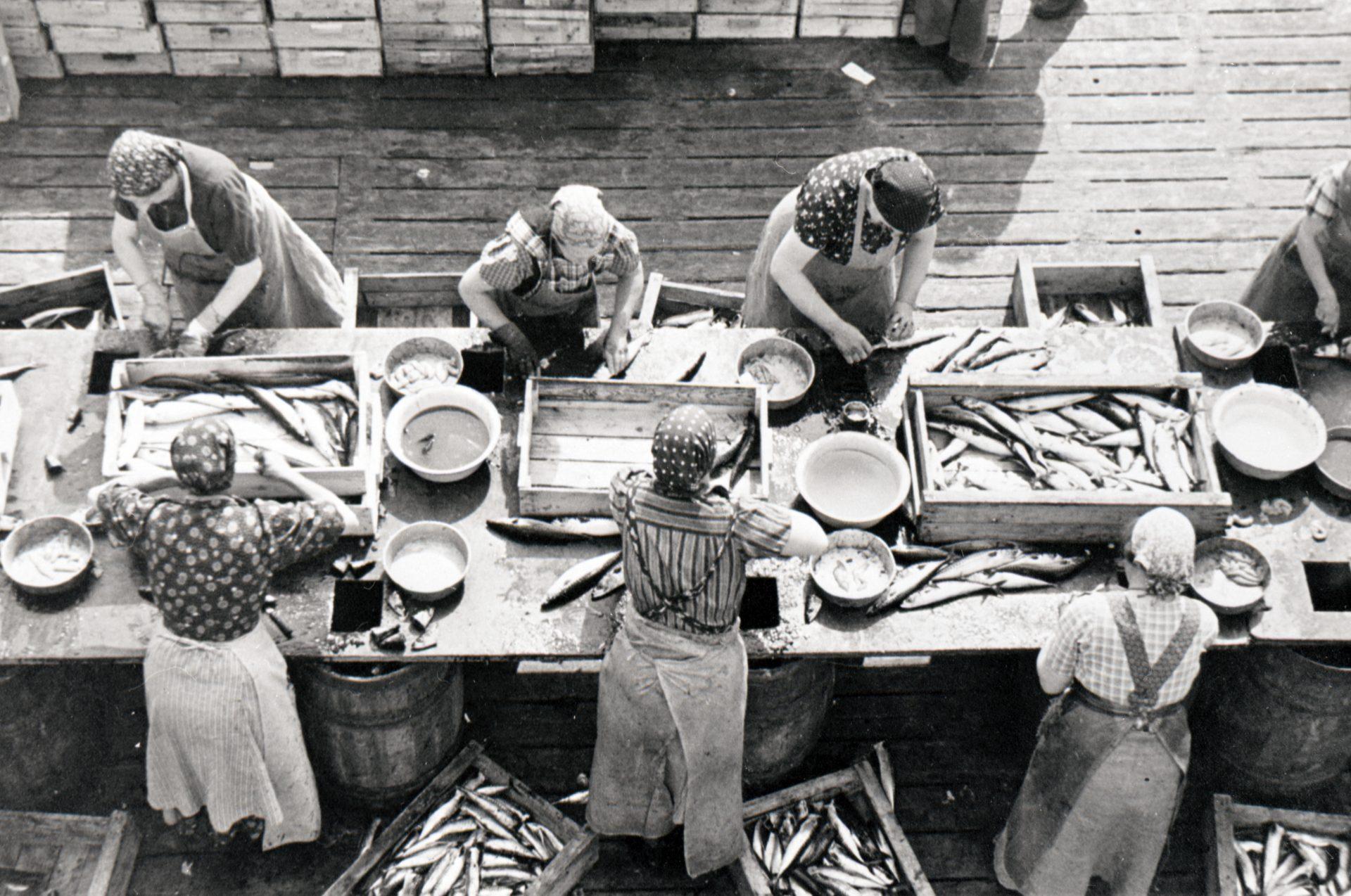 Kvinnor som rensar fisk.