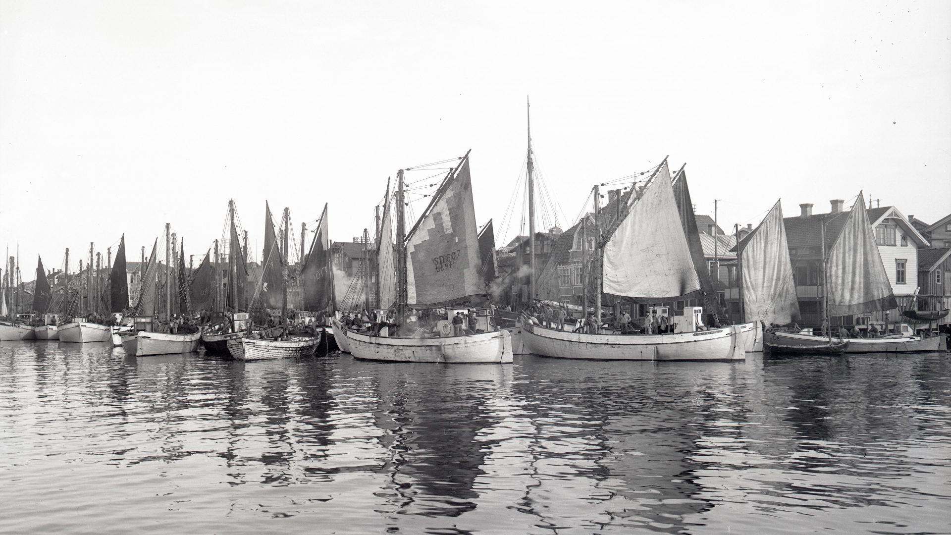 Ett flertal fiskebåtar med segel framför en fiskeby.