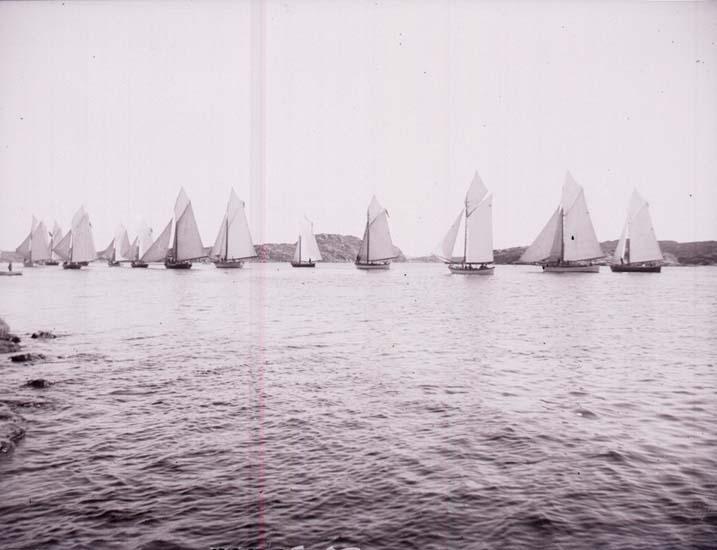 En mängd segelfartyg som kappseglar.